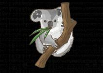 Blu Winterharter Eukalyptus