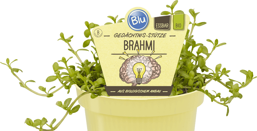 Blu - Gedächtnis-Stütze Brahmi