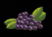 Blu Aronia Vitaminbeere