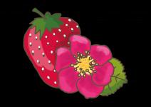Blu 'Toscana' Erdbeere