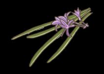 Blu Würziges Knobi-Gras