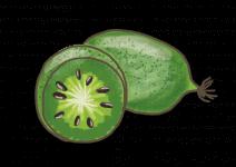 Blu  Mini-Kiwi