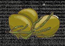 Blu Würziges Olivenkraut