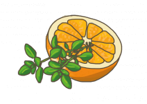 Blu Balsamischer Orangen Thymian