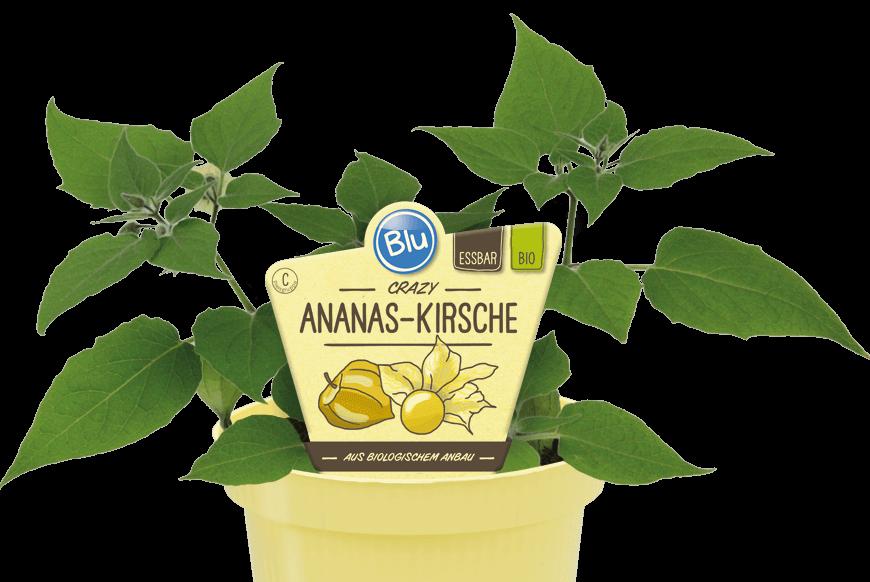 Blu - Crazy Ananas-Kirsche