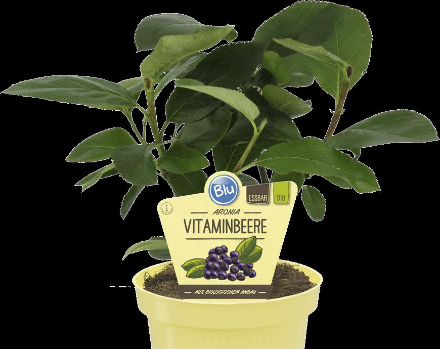 Blu - Aronia Vitaminbeere