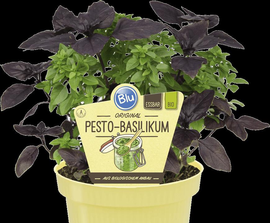 Blu - Original Pesto-Basilikum