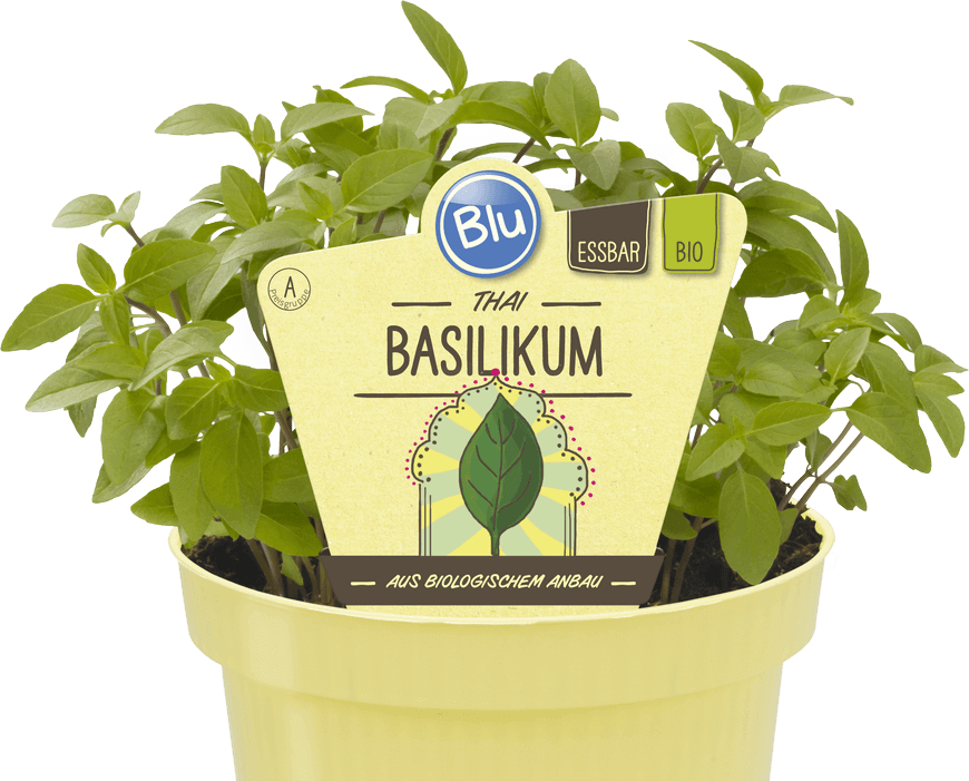 Blu - Thai Basilikum