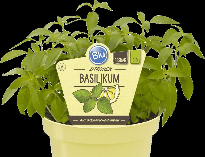 Blu - Zitronen Basilikum