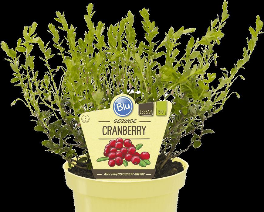 Blu - Gesunde Cranberry