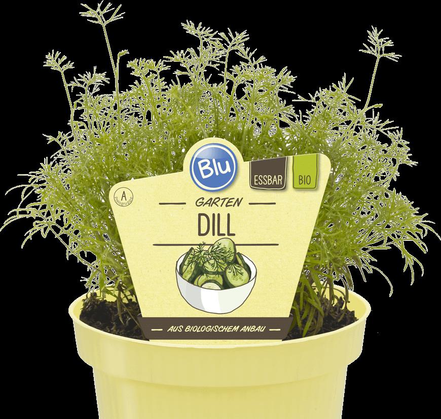 Blu - Garten Dill
