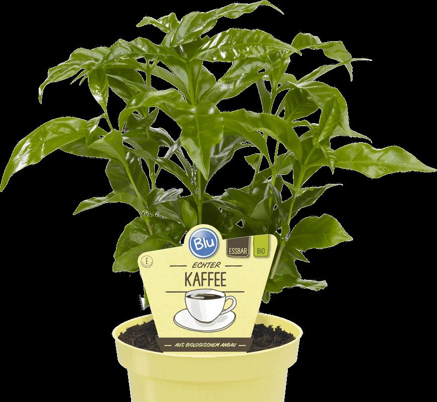 Blu - Echter Kaffee