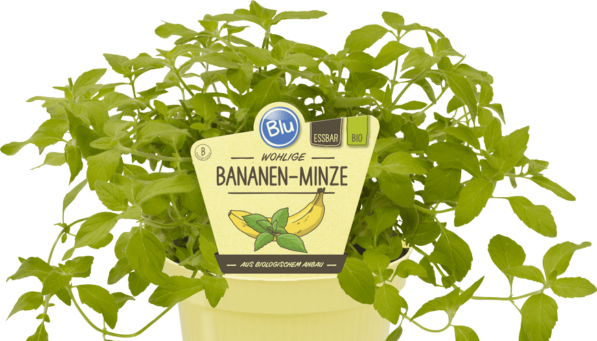 Blu - Wohlige Bananen-Minze