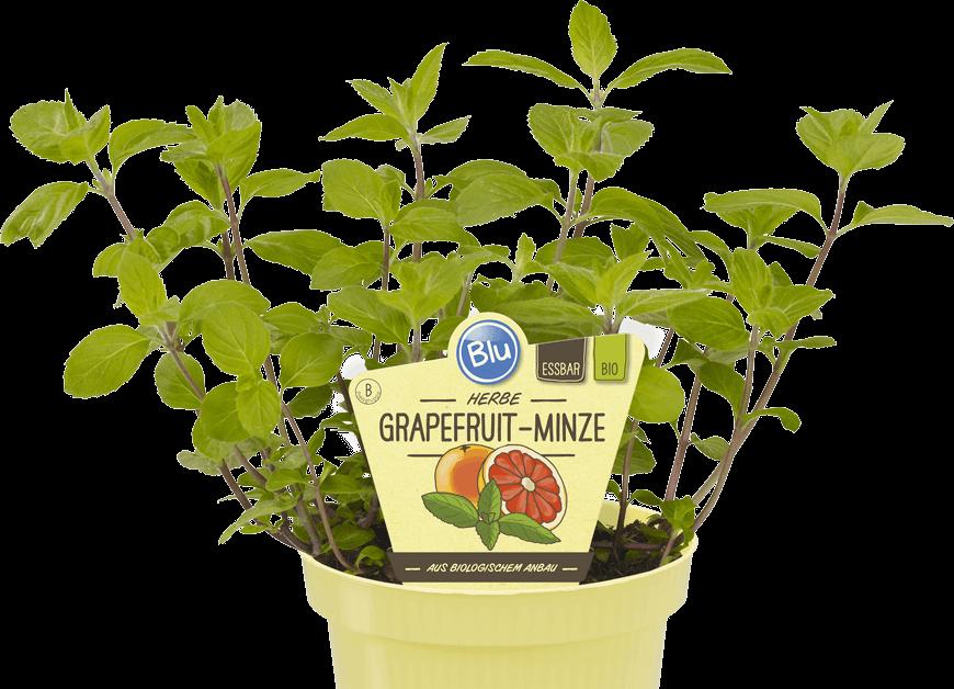 Blu - Herbe Grapefruit-Minze