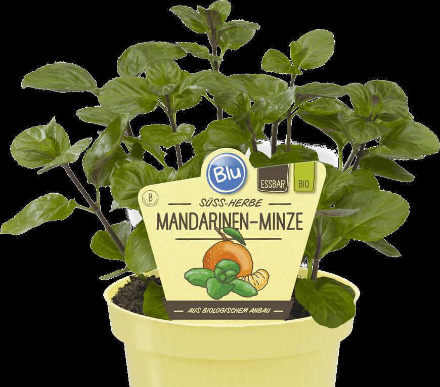 Blu - Süss-herbe Mandarinen-Minze