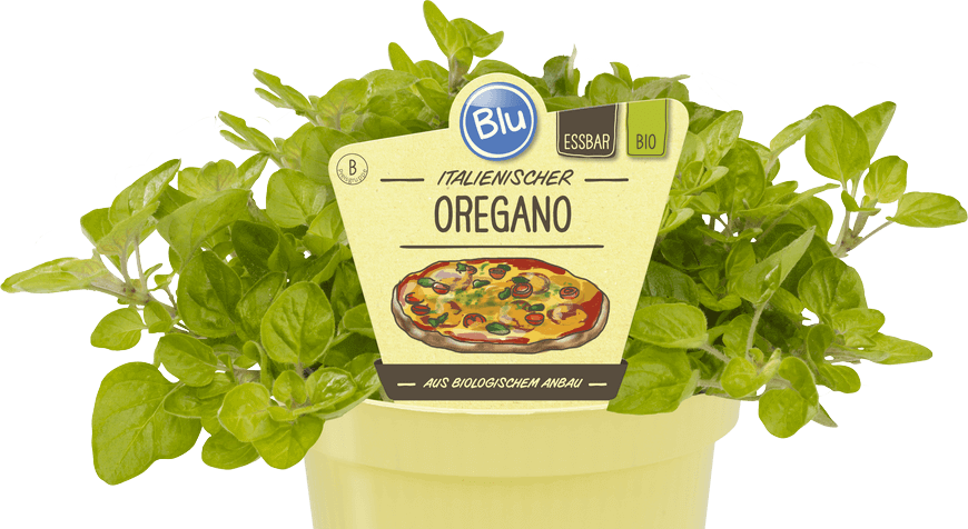 Blu - Italienischer Oregano