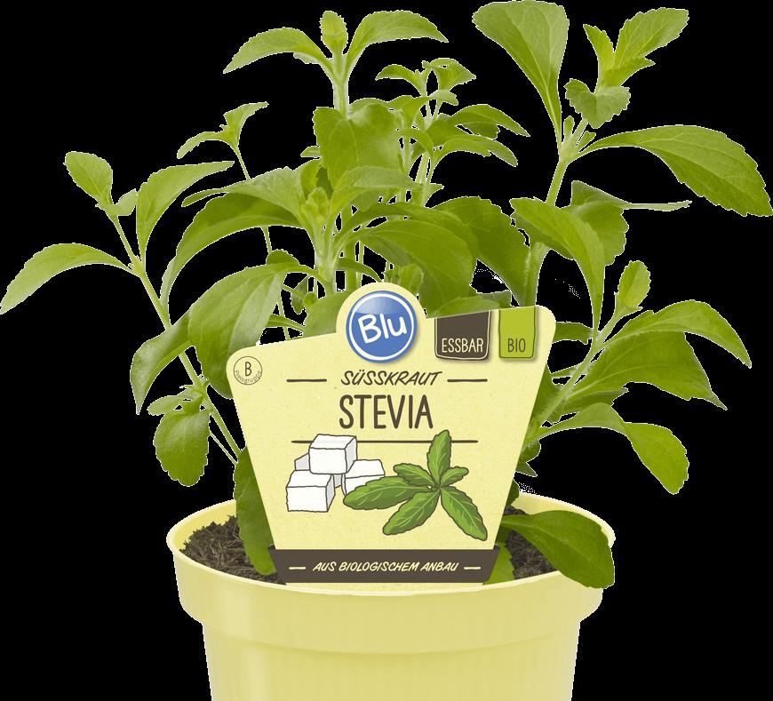 Blu - Süsskraut Stevia