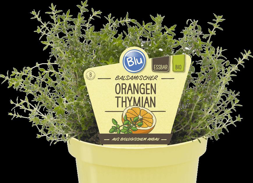 Blu - Balsamischer Orangen Thymian