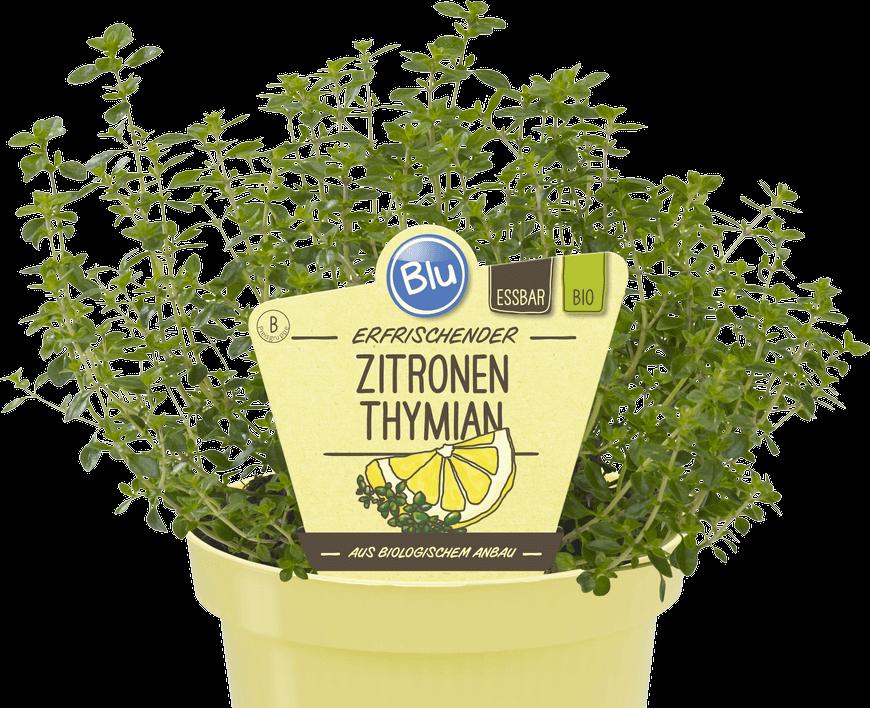 Blu - Erfrischender Zitronenthymian