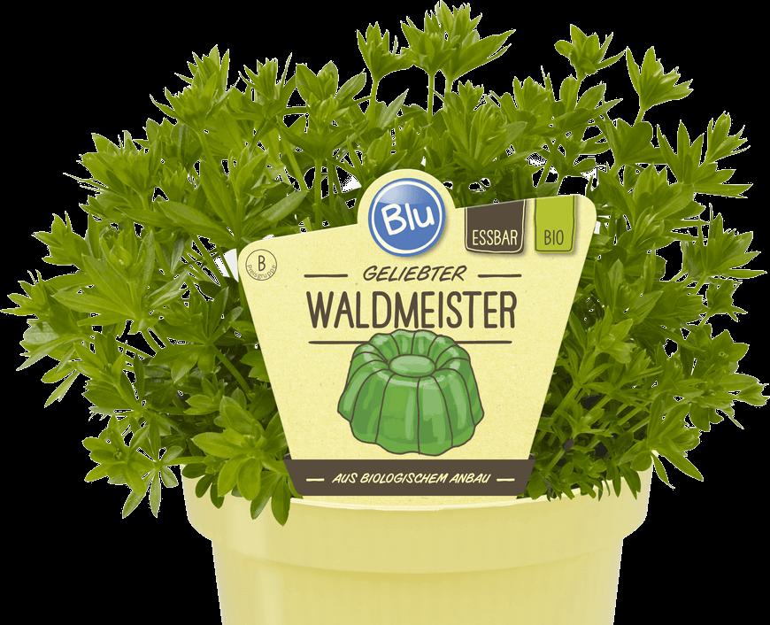 Blu - Geliebter Waldmeister