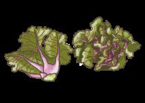 Blu Rosenkohl Flower Sprout®