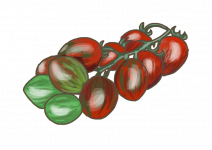 Blu kompakte Tomate Balkonia