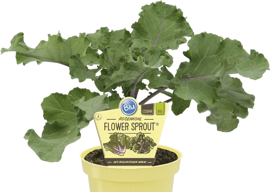 Blu - Rosenkohl Flower Sprout®