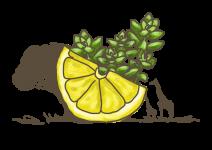 Blu Afrikanisches Zitronenkraut