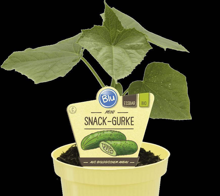 Blu - Mini Snack-Gurke