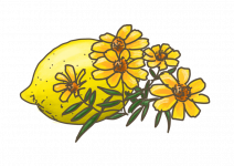 Blu Erfrischende Zitronen-Tagetes