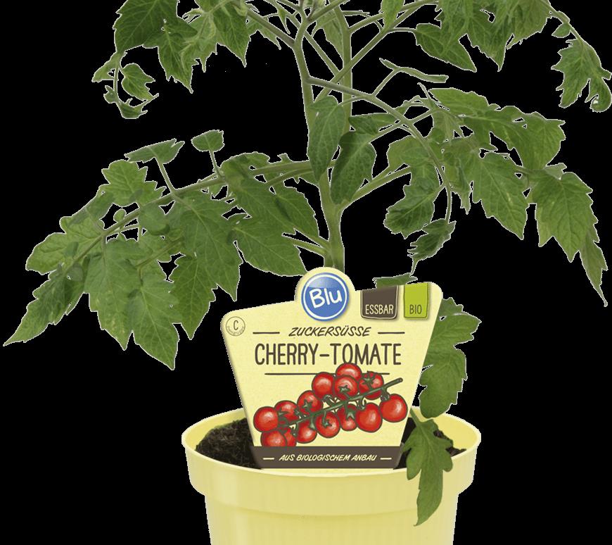 Blu - Zuckersüsse Cherry-Tomate