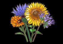 Blu Blühende Bienenweide