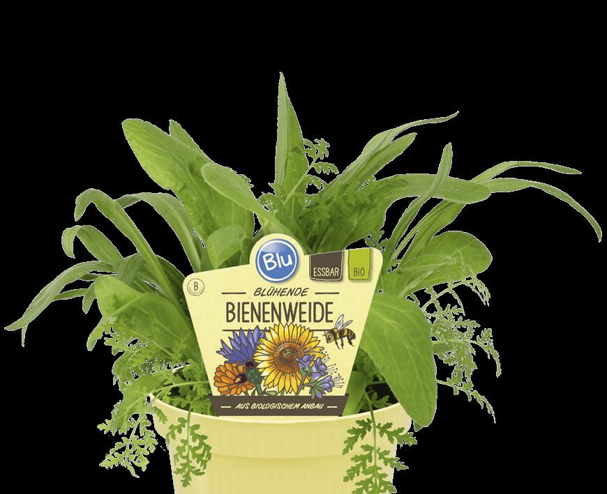 Blu - Blühende Bienenweide
