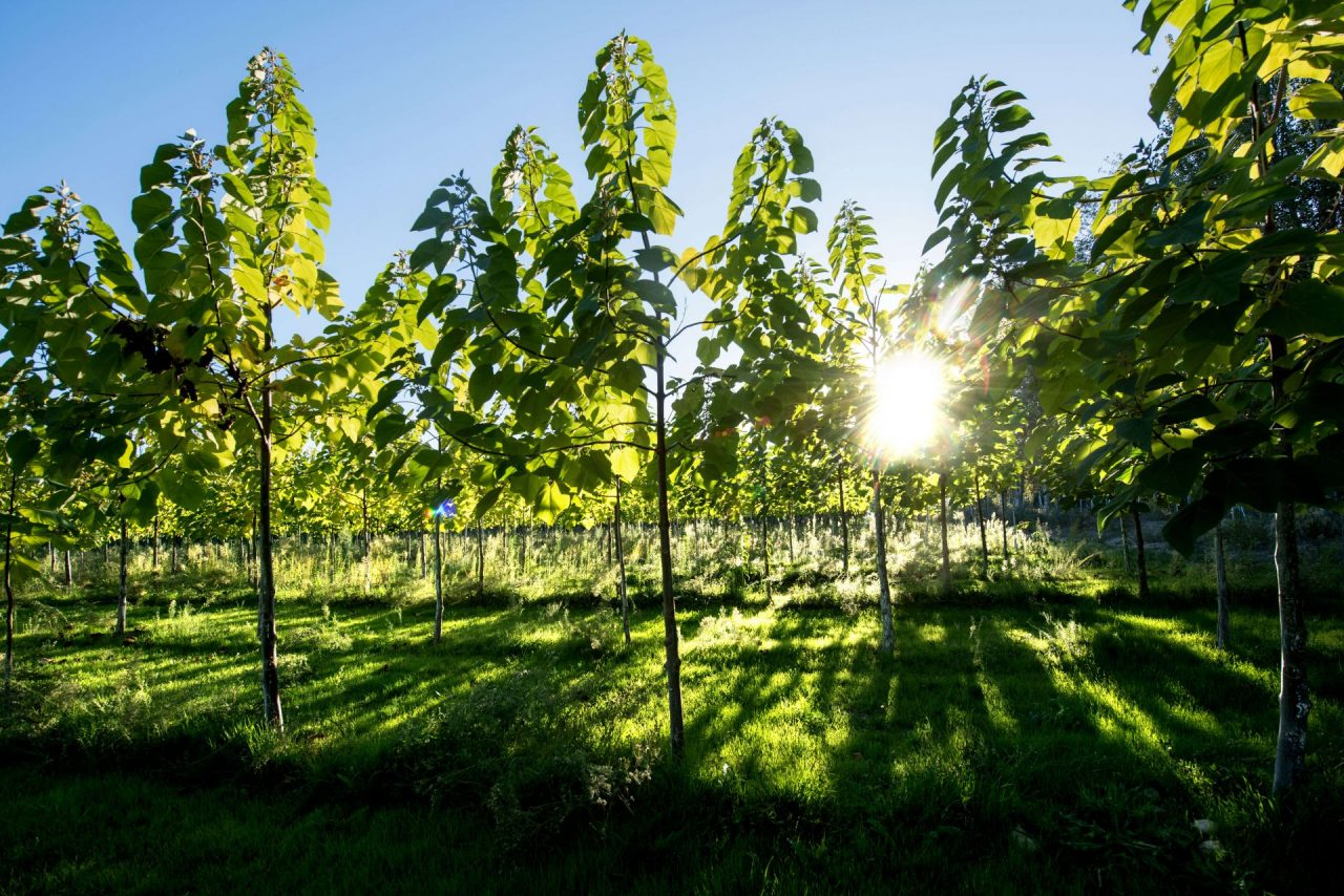 Klimabaum