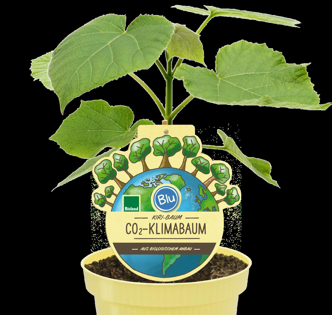 Blu - KIRI-BAUM CO<sub>2</sub>-Klimabaum