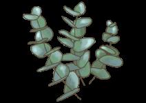 Blu 'ENJOY' Eukalyptus