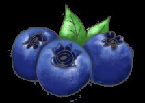 Blu süsse Heidelbeere
