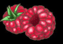 Blu Fruchtige Himbeere